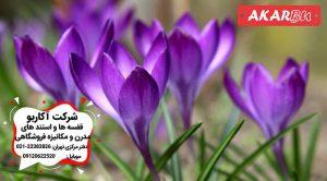 صادرات زعفران ایران
