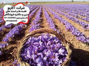 کاشت و صادرات زعفران ایران