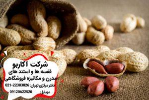 لاغری با مصرف بادام زمینی